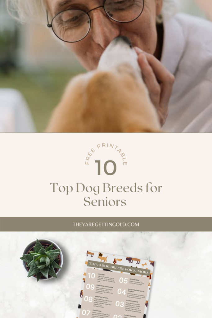 Helping Seniors With Pets Pros and Cons